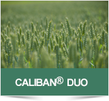 Caliban Duo